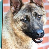 Adopt A Pet :: GUNTHER VON THEODORE - Los Angeles, CA