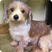 Adopt A Pet :: HEATHER - Cadiz, OH