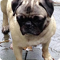 Adopt A Pet :: Lylah - Rockville, MD