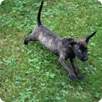 Adopt A Pet :: Ally : Wiggly Happy Baby! (CT) - Seymour, CT