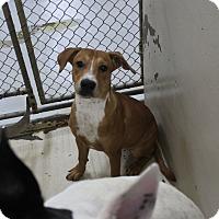 Adopt A Pet :: A25 MICKEY - Odessa, TX