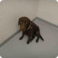 Adopt A Pet :: MYA - Denver, CO