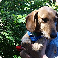 Adopt A Pet :: TANK - Portland, OR