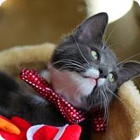 Adopt A Pet :: Wasabi - Santa Clarita, CA