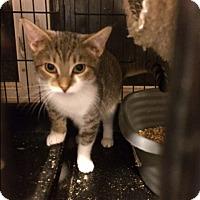 Adopt A Pet :: Chestnut - Bedford Hills, NY