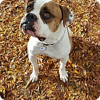 Adopt A Pet :: Daffy - Tucson, AZ