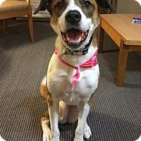 Adopt A Pet :: Zoe - Columbus, IN