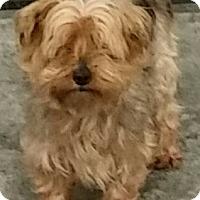 Adopt A Pet :: Bandit - Urbana, OH