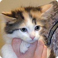 Adopt A Pet :: 328660 - Wildomar, CA