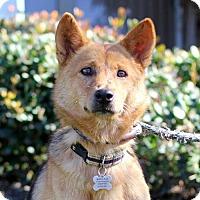 Adopt A Pet :: Judi - San Diego, CA