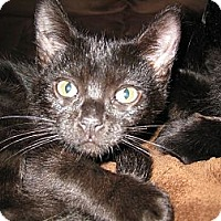 Adopt A Pet :: Chex - Clearfield, UT