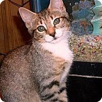 Adopt A Pet :: Kiara - Kirkwood, DE