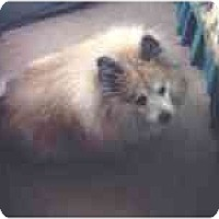 Adopt A Pet :: Lewie - Chesapeake, VA