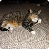 Adopt A Pet :: Mary Kate - Barnegat, NJ
