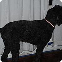 Adopt A Pet :: Vaughn - Ogden, UT