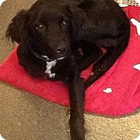 Adopt A Pet :: Colin - Lancaster, OH