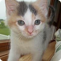 Adopt A Pet :: Princess - Acme, PA