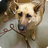 Adopt A Pet :: Bella - Victorville, CA