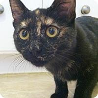 Adopt A Pet :: Mystyk - North Highlands, CA