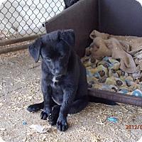 Adopt A Pet :: River - Bedford, VA