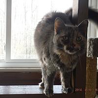 Adopt A Pet :: Reese - Saint Albans, WV