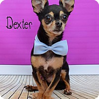 Adopt A Pet :: Dexter - Wellington, FL