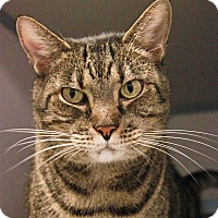 Adopt A Pet :: Greg - New Rochelle Humane, NY