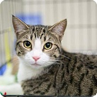 Adopt A Pet :: Sprinkles - Royal Palm Beach, FL