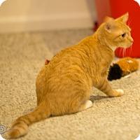 Adopt A Pet :: Jitterbug - Stafford, VA