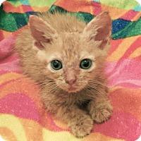 Adopt A Pet :: Damian - Austin, TX
