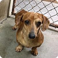 Adopt A Pet :: MERLIN - Gustine, CA