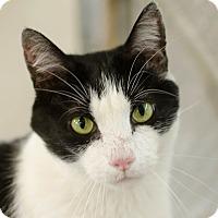 Adopt A Pet :: Gizmo - Greenwood, SC