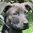 Adopt A Pet :: Troy