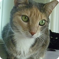 Adopt A Pet :: Petunia - Hamburg, NY