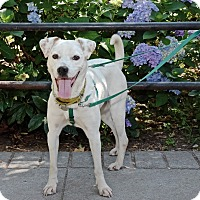 Adopt A Pet :: Bebe Neuwirth - Jersey City, NJ
