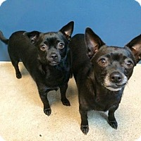 Adopt A Pet :: Almond - Bellingham, WA