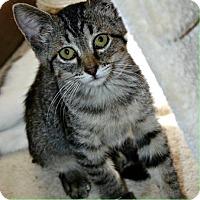 Adopt A Pet :: Kroger - Richland Hills, TX