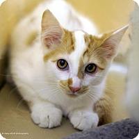 Adopt A Pet :: Dedo - Tucson, AZ
