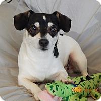 Adopt A Pet :: Harley(13 lb) Laid Back Dude! - SUSSEX, NJ