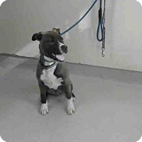 Adopt A Pet :: A5016373 is at Lancaster - Beverly Hills, CA