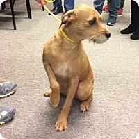 Adopt A Pet :: Murphy - Powder Springs, GA