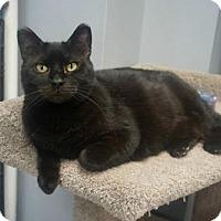 Adopt A Pet :: Maggie - Carroll, IA