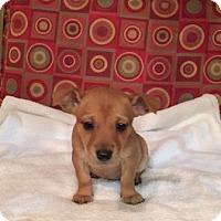 Adopt A Pet :: Olivia - Powder Springs, GA
