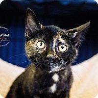 Adopt A Pet :: A..  Millie - Mooresville, NC