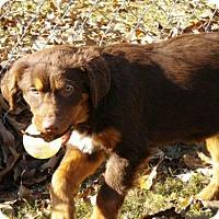 Adopt A Pet :: Caia CC - Providence, RI