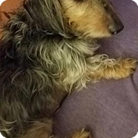 Adopt A Pet :: Bo - Jacksonville, FL