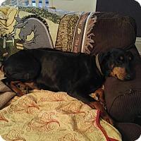 Adopt A Pet :: Endora - Bristolville, OH
