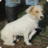 Adopt A Pet :: Marcie - Germantown, MD