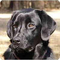 Adopt A Pet :: Harper - Mocksville, NC