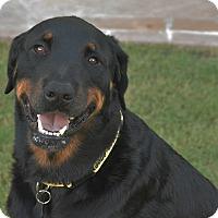 Adopt A Pet :: Rafiki - Gilbert, AZ
